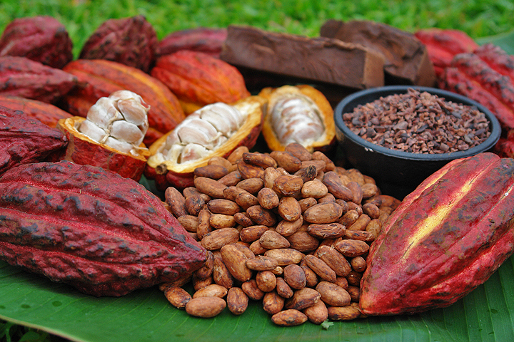 Theobroma Cacao – Food of the Gods